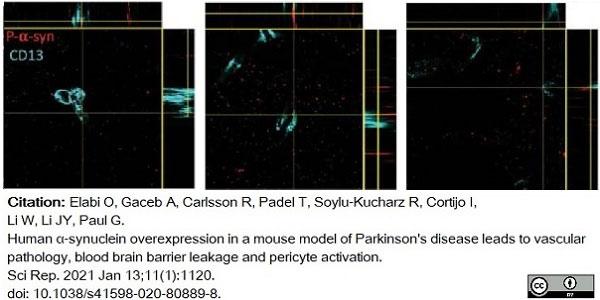 Anti Mouse CD13 Antibody, clone R3-63 thumbnail image 12