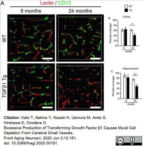 Anti Mouse CD13 Antibody, clone R3-63 thumbnail image 14