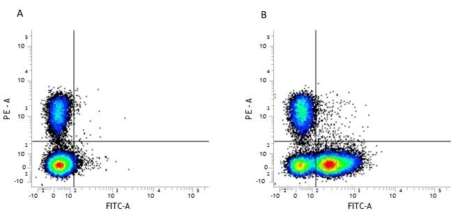 Anti Mouse CD16/CD32 Antibody, clone FCR4G8 thumbnail image 1