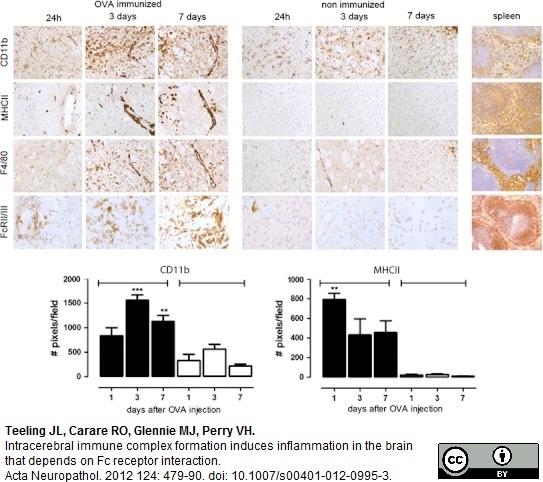Anti Mouse CD16/CD32 Antibody, clone FCR4G8 thumbnail image 2