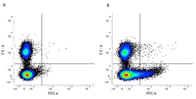 Anti Mouse CD169 antibody, clone 3D6.112 thumbnail image 1