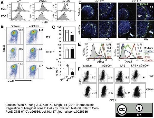 Anti Mouse CD169 Antibody, clone MOMA-1 thumbnail image 12
