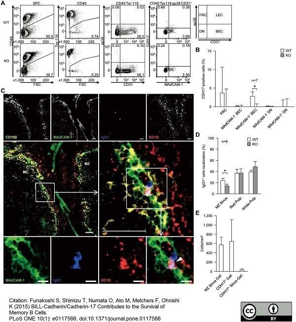 Anti Mouse CD169 Antibody, clone MOMA-1 thumbnail image 9