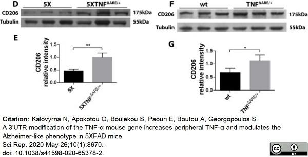 Anti Mouse CD206 Antibody, clone MR5D3 thumbnail image 13