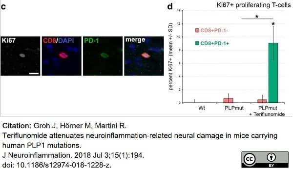 Anti Mouse CD279 Antibody, clone RMP1-30 thumbnail image 2