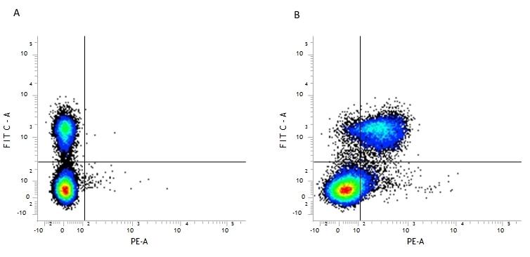 Anti Mouse CD28 Antibody, clone E18 thumbnail image 2