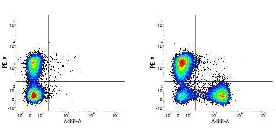 Anti Mouse CD3 Antibody, clone 145-2C11 thumbnail image 2