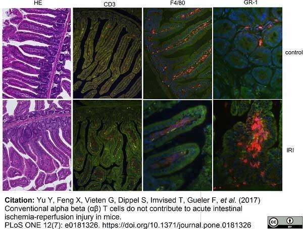 Anti Mouse CD3 Antibody, clone 145-2C11 thumbnail image 3