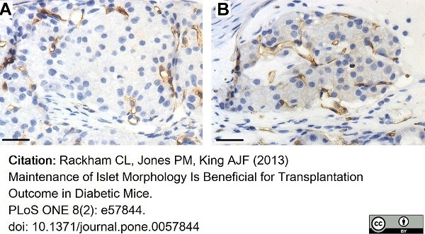 Anti Mouse CD34 Antibody, clone MEC14.7 thumbnail image 12