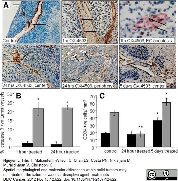 Anti Mouse CD34 Antibody, clone MEC14.7 thumbnail image 7