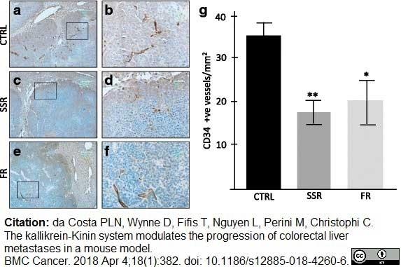 Anti Mouse CD34 Antibody, clone MEC14.7 thumbnail image 9