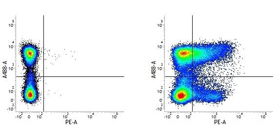 Anti Mouse CD36 Antibody, clone MF3 thumbnail image 1
