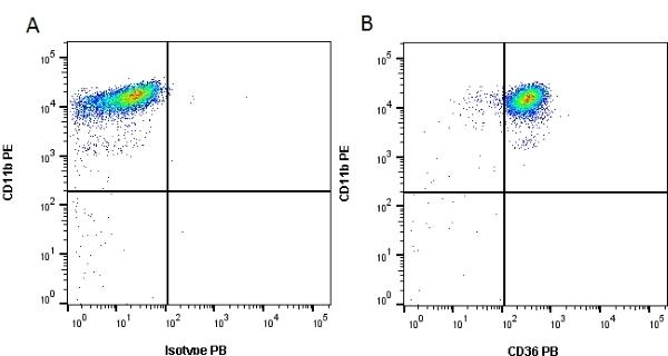Anti Mouse CD36 Antibody, clone MF3 thumbnail image 2