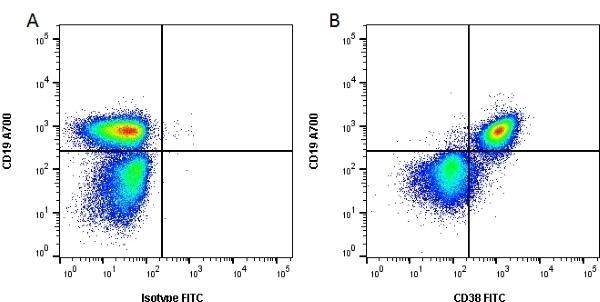 Anti Mouse CD38 Antibody, clone 90 gallery image 1