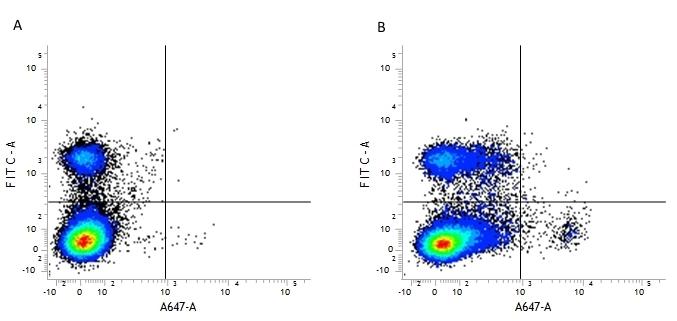 Anti Mouse CD39 Antibody, clone Duha59 thumbnail image 1