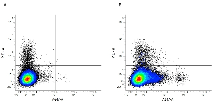 Anti Mouse CD39 Antibody, clone Duha59 thumbnail image 2