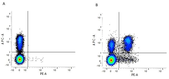 Anti Mouse CD4 Antibody, clone GK1.5 thumbnail image 1