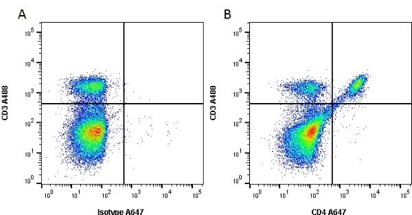 Anti Mouse CD4 Antibody, clone RM4-5 thumbnail image 3