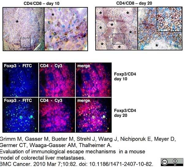Anti Mouse CD4 Antibody, clone YTS191.1 thumbnail image 7