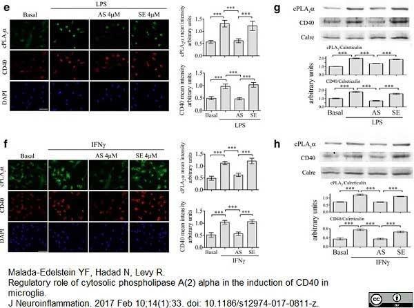 Anti Mouse CD40 Antibody, clone 3/23 thumbnail image 3