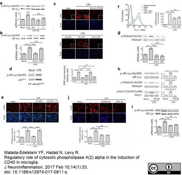Anti Mouse CD40 Antibody, clone 3/23 thumbnail image 4