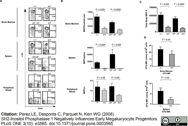 Anti Mouse CD41 Antibody, clone MWReg30 thumbnail image 4