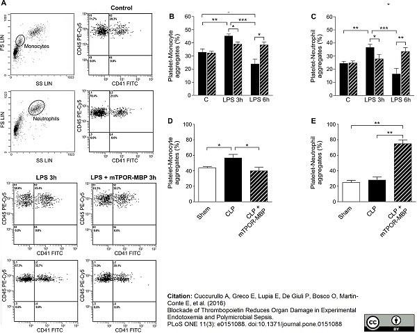 Anti Mouse CD41 Antibody, clone MWReg30 thumbnail image 9