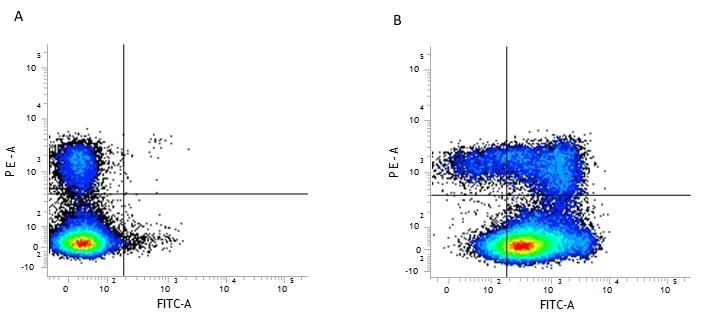 Anti Mouse CD44 Antibody, clone 5035-41.1D thumbnail image 1