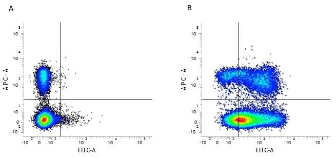 Anti Mouse CD44 Antibody, clone 5035-41.1D thumbnail image 2