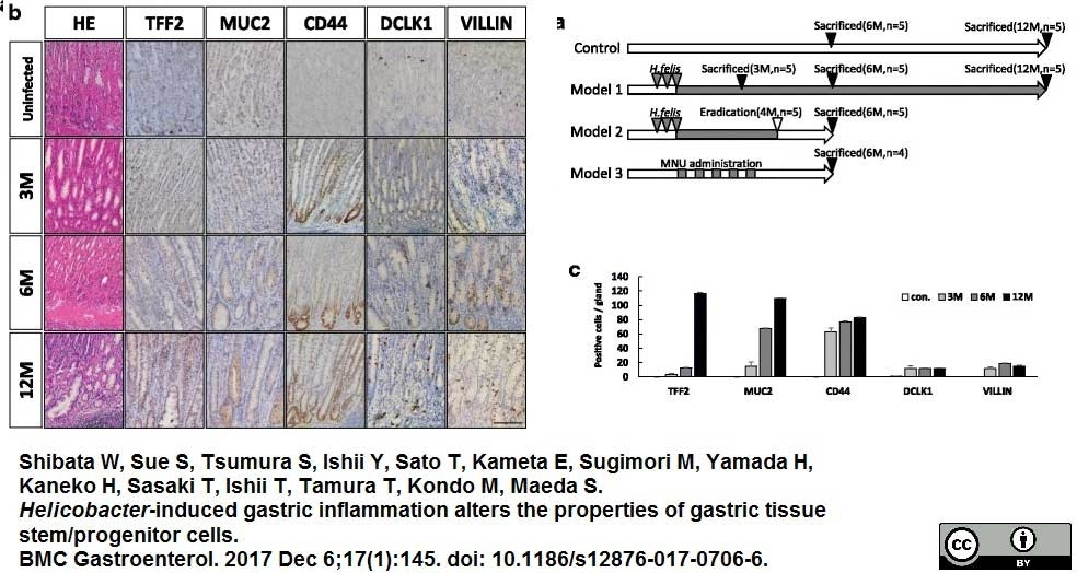 Anti Mouse CD44v6 Antibody, clone 9A4 thumbnail image 2