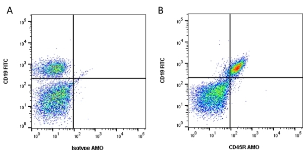 Anti Mouse CD45R Antibody, clone RA3-6B2 thumbnail image 1