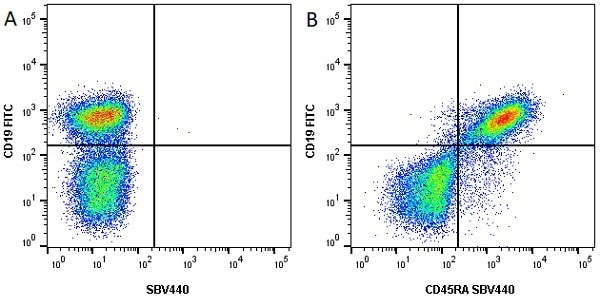 Anti Mouse CD45R Antibody, clone RA3-6B2 thumbnail image 10