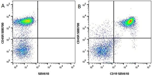 Anti Mouse CD45R Antibody, clone RA3-6B2 thumbnail image 11
