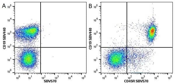 Anti Mouse CD45R Antibody, clone RA3-6B2 thumbnail image 20