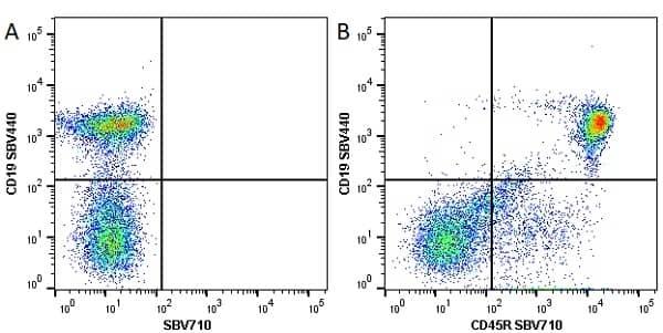 Anti Mouse CD45R Antibody, clone RA3-6B2 thumbnail image 21