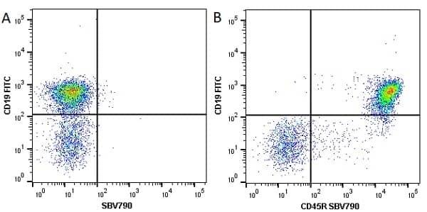 Anti Mouse CD45R Antibody, clone RA3-6B2 thumbnail image 24