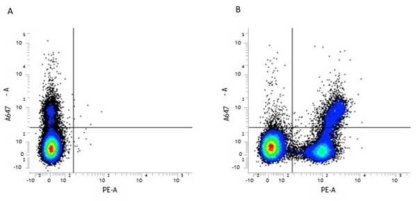 Anti Mouse CD45R Antibody, clone RA3-6B2 thumbnail image 3