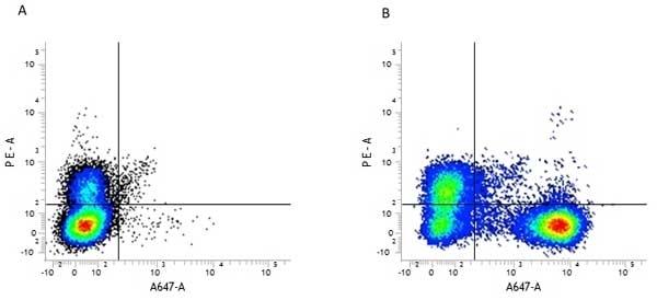 Anti Mouse CD45R Antibody, clone RA3-6B2 thumbnail image 4