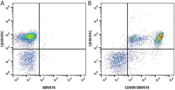 Anti Mouse CD45R Antibody, clone RA3-6B2 thumbnail image 7