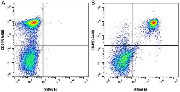 Anti Mouse CD45R Antibody, clone RA3-6B2 thumbnail image 8