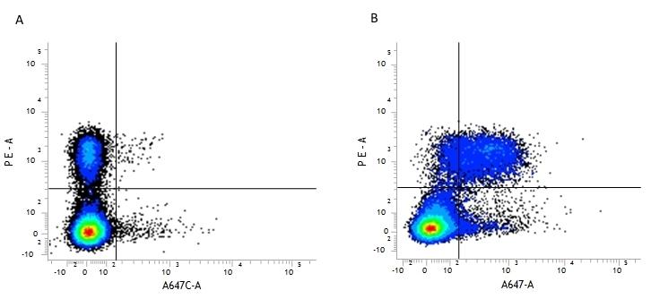Anti Mouse CD5 Antibody, clone YTS 121.5.2 gallery image 1