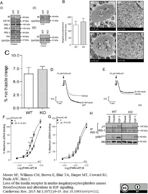 Anti Mouse CD61 Antibody, clone HM beta 3.1 thumbnail image 3