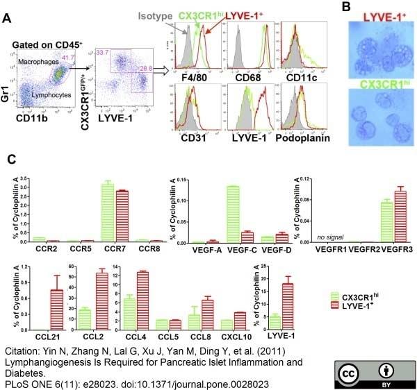 Anti Mouse CD68 Antibody, clone FA-11 thumbnail image 14