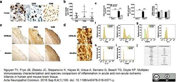 Anti Mouse CD68 Antibody, clone FA-11 thumbnail image 29