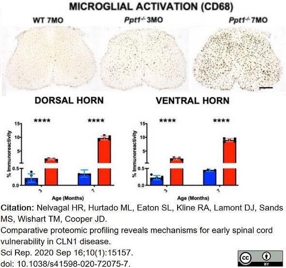 Anti Mouse CD68 Antibody, clone FA-11 thumbnail image 60