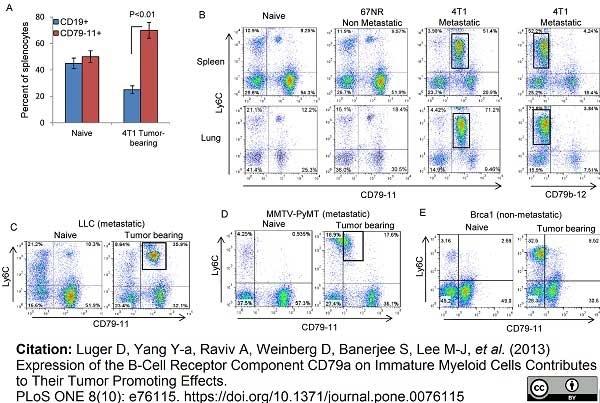 Anti Mouse CD79b Antibody, clone HM79-11 thumbnail image 1