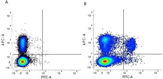 Anti Mouse CD8 Alpha Antibody, clone 53-6.7 thumbnail image 4