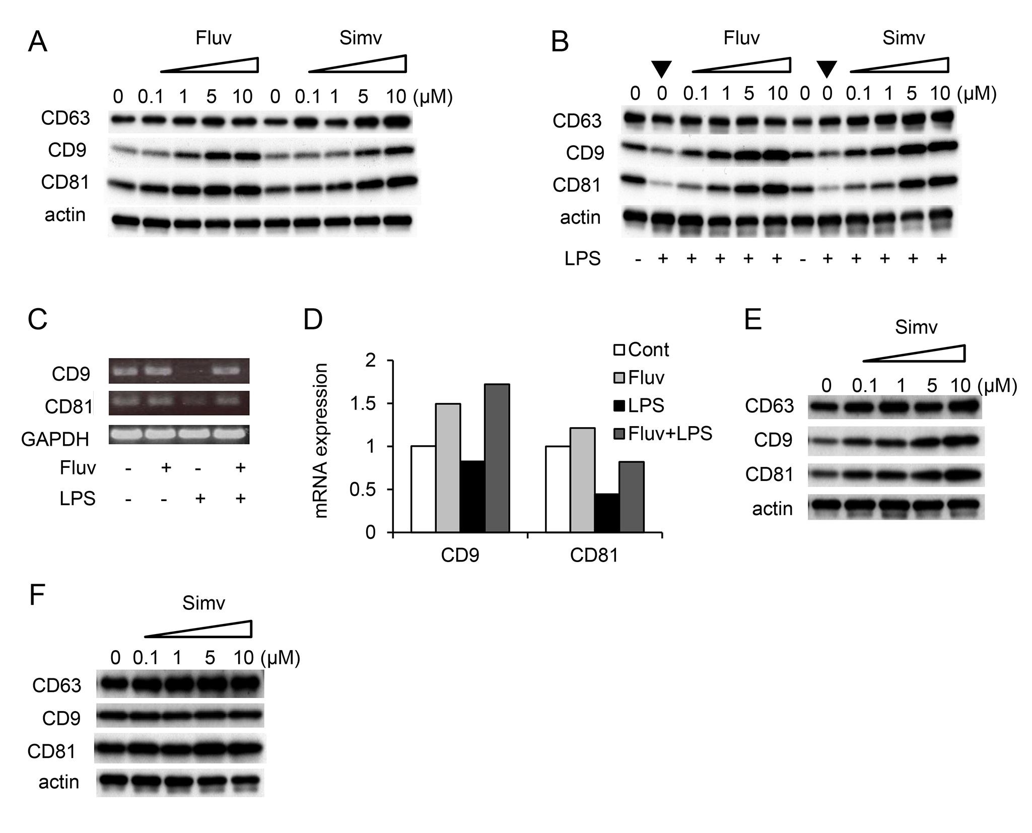 Anti Mouse CD81 Antibody, clone Eat2 thumbnail image 1