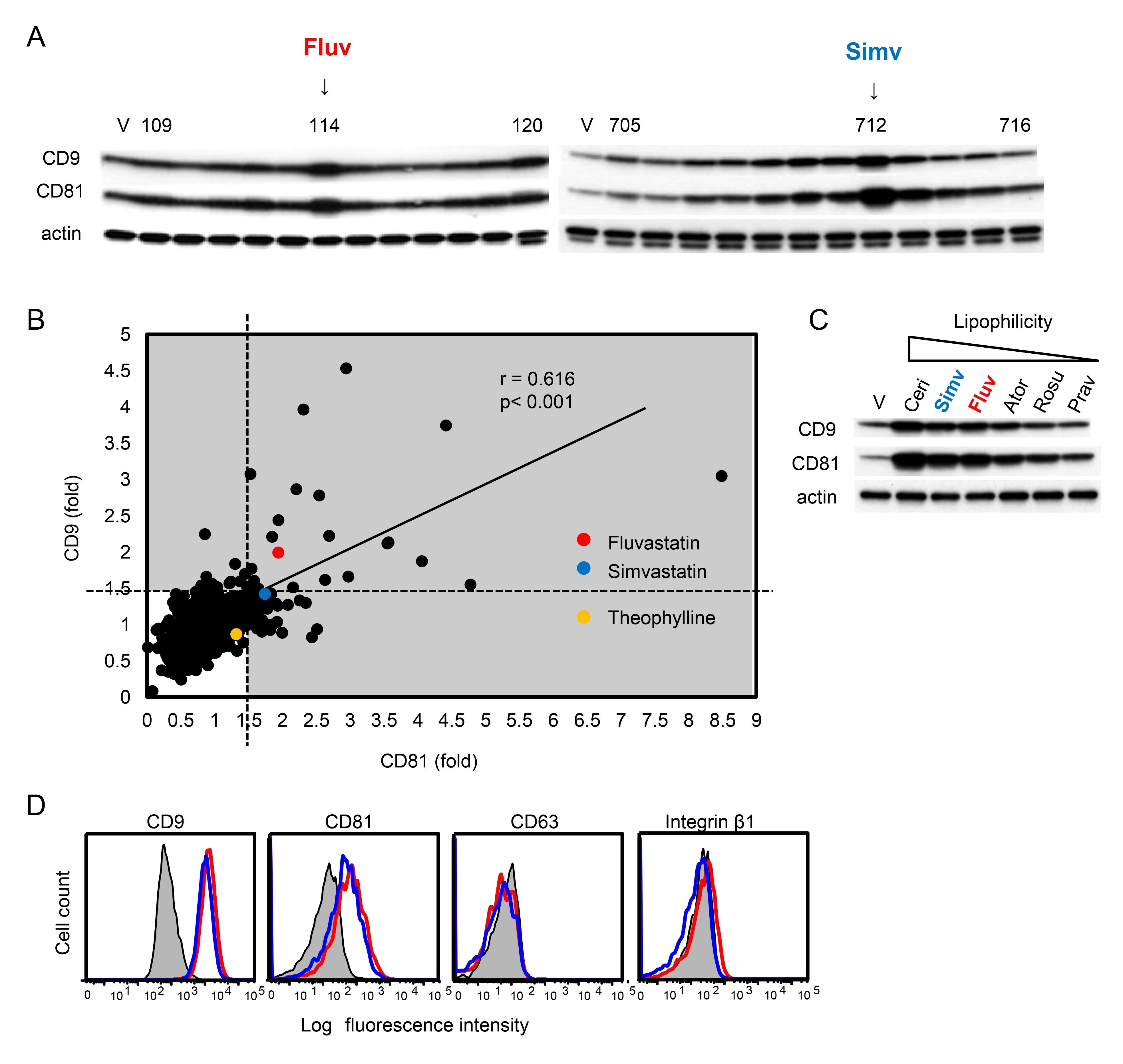 Anti Mouse CD81 Antibody, clone Eat2 thumbnail image 3