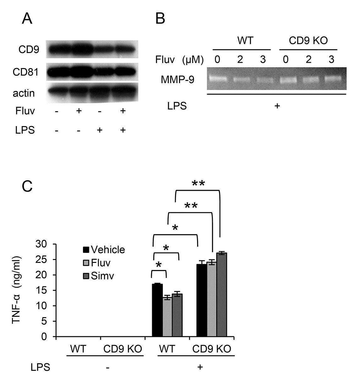 Anti Mouse CD81 Antibody, clone Eat2 thumbnail image 4